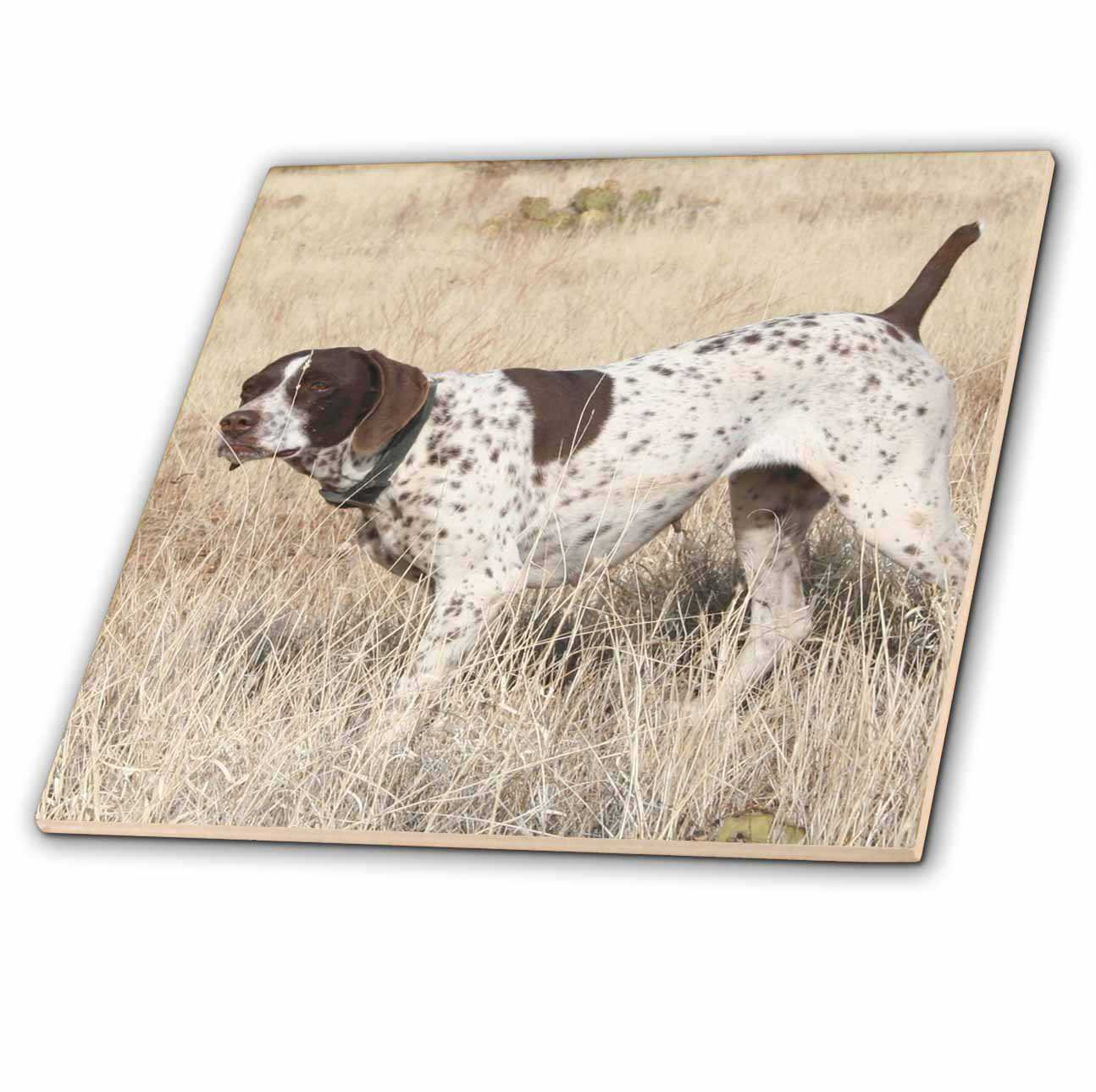 3dRose German Shorthair Pointer - Ceramic Tile, 8-inch