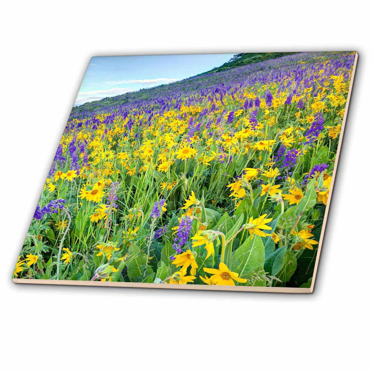 3dRose USA, Colorado, Crested Butte. Wildflowers covering hillside. - Ceramic Tile, 6-inch